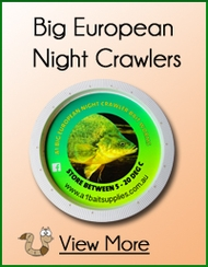 Big Red European Night Crawlers