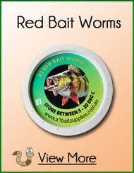 Red Bait Worms